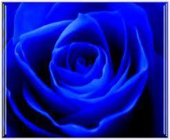 wo in der schweiz kann man blaue rosen kaufen farbe. Black Bedroom Furniture Sets. Home Design Ideas
