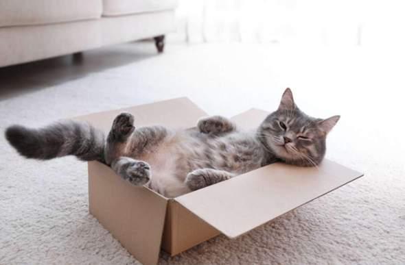 Wo ist es für Katzen am gemütlichsten?