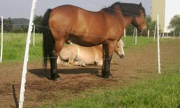 .. - (Pferde, Pony, Pferdepass)