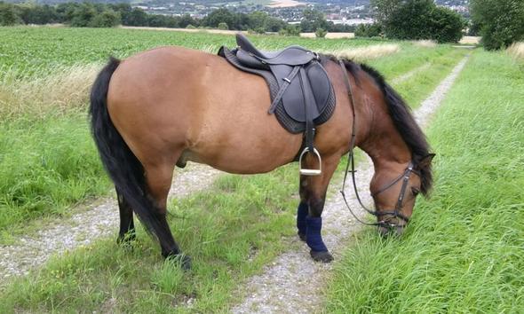 ... - (Pferde, Pony, Pferdepass)