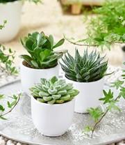 Wo kann man diese kleinen Pflanzen kaufen?