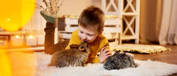Wo kauft Ihr für eure lieblinge das Haustierbedarf ein (Spielzeug, Futter ect.)?