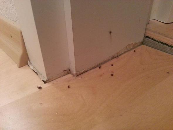 wo kommen mini spinnen her insekten ungeziefer. Black Bedroom Furniture Sets. Home Design Ideas