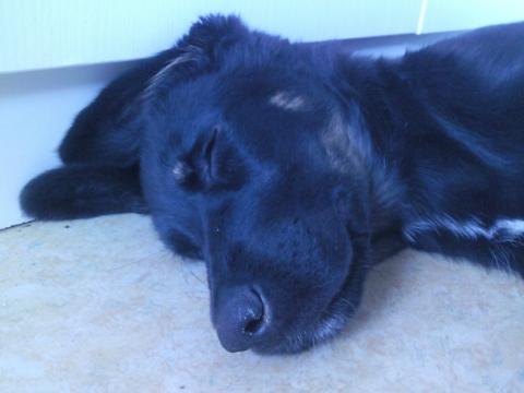 meine hündin - (Hund, hundeprobleme, Hundeschlafplatz)