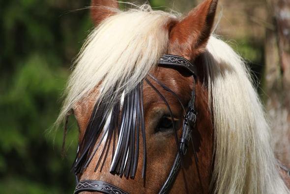 Spanisches Stirnband - (trense, Stirnband, Fransen)