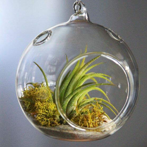 woher bekommt man diese glaskugeln garten pflanzen blumen. Black Bedroom Furniture Sets. Home Design Ideas