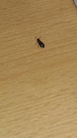 woher kommen diese k fer insekten wie loswerden. Black Bedroom Furniture Sets. Home Design Ideas
