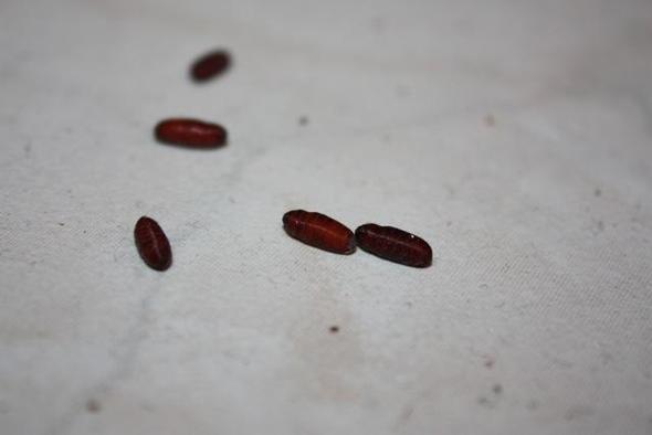 woher kommen diese maden / würmer / eier? bitte um tipps - Würmer Küche
