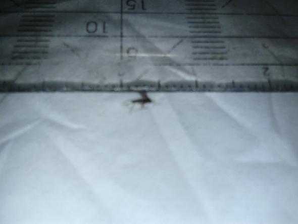 Größe - (Natur, fliegen, Insekten)