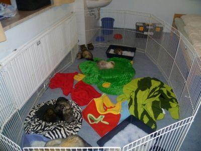 woher krieg ich dieses frettchengehege oder zaun tiere tierhaltung kleintiere. Black Bedroom Furniture Sets. Home Design Ideas
