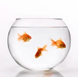 woher kriegt man sowas her fische. Black Bedroom Furniture Sets. Home Design Ideas
