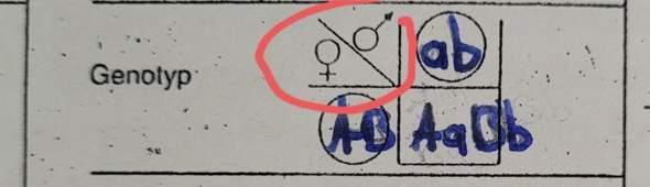 Woher weiß man beim mendelschen Kreuzungsschema welches Allel weiblich oder mänlich ist?