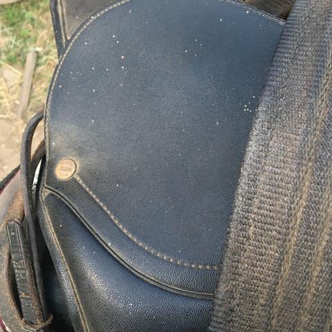 Sattel.  - (Sport, Pferde, reiten)