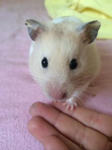 Das ist meine schöne! :-) - (Tiere, Hamster)