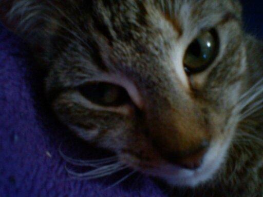 Miaa :D - (Schwangerschaft, Katze, Verhalten)
