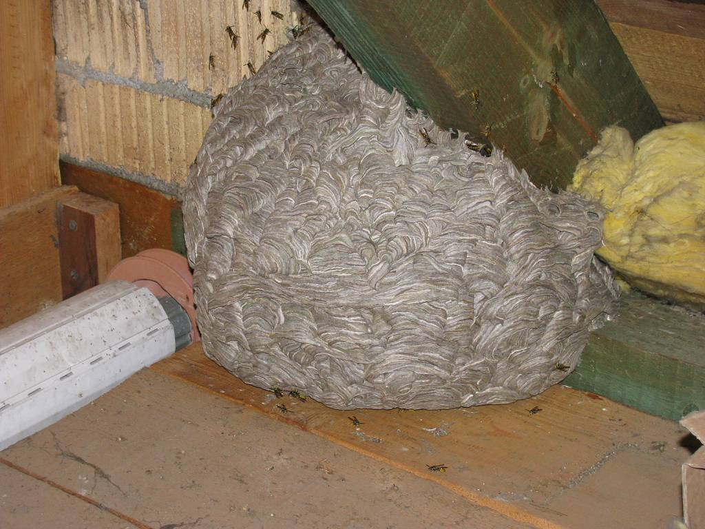 wtf wespennest auf dem dachboden o feuerwehr wespen. Black Bedroom Furniture Sets. Home Design Ideas