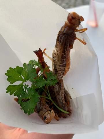 Würdest du frittierte Würmer essen?