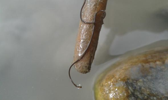 Bild 1 - (Würmer, Tirt)