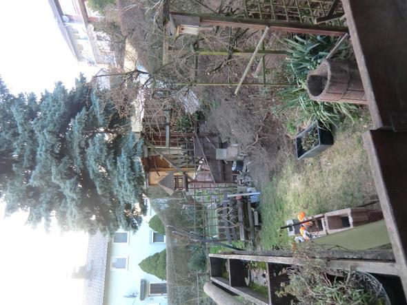 Baum - (Garten, Baum)