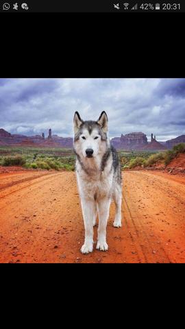 Nummer eins - (Hund, Rasse)