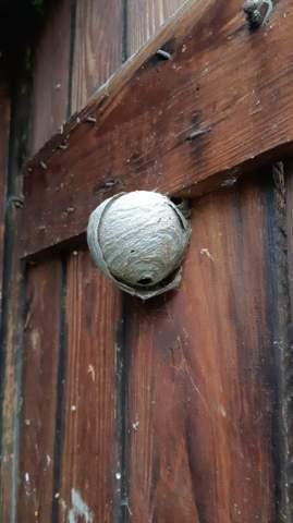 Welches Nest?