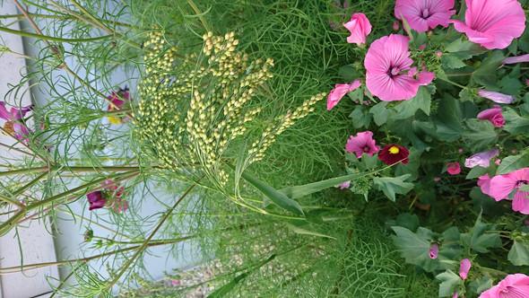 Das besagte Gras - (Pflanzen, Botanik)