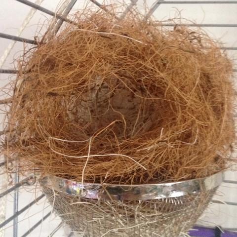 ZBNest - (Vögel, Nest, Zebrafinken.)