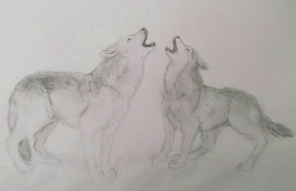 Zeichnen Was Kann Ich Verbessern Wolfe