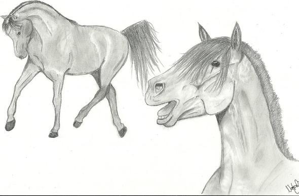 Zeichnung Bleistifft Pferde Kunst Zeichnen