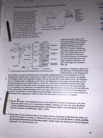 - (Schule, Gesundheit und Medizin, Biologie)