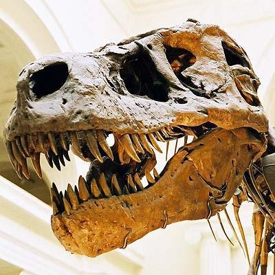 - (Knochen, Dinosaurier, Paläontologie)
