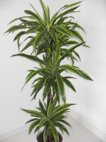 Pflanze 2008 - (Pflanzen, Pflanzenpflege, Zimmerpflanzen)
