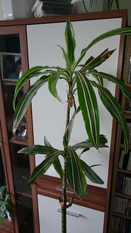 Pflanze 2016 - (Pflanzen, Pflanzenpflege, Zimmerpflanzen)