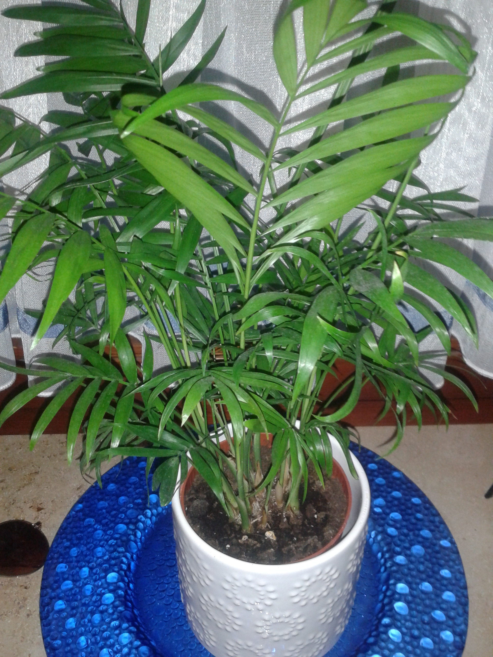 zimmerpflanzen erkennen pflanzen blumen pflanzenpflege. Black Bedroom Furniture Sets. Home Design Ideas