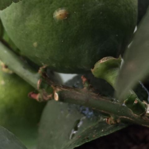 Bild 3 - (Gesundheit und Medizin, Pilze, Schädlinge)