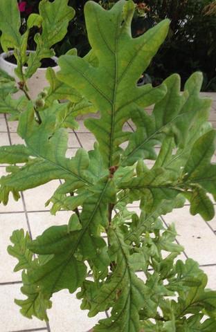 Gefundene Blätter - (Baum, Botanik, Baumarkt)