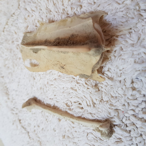 2 Knochen - (Meer, Knochen, Nordsee)
