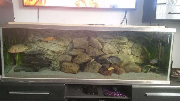 ... - (Fische, Aquarium, Licht)