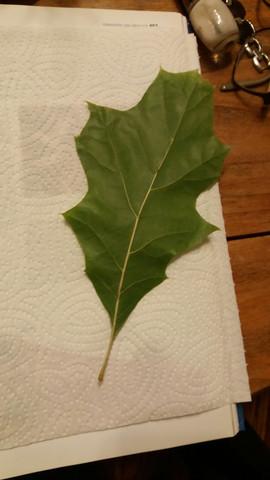 Bild 1 - (Baum, Wald, Blatt)