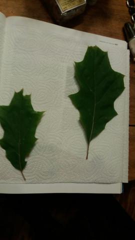 Bild 2 - (Baum, Wald, Blatt)
