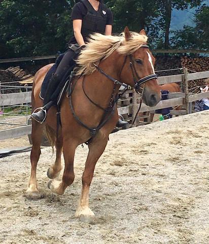 Bild davon - (Pferde, reiten, Sattel)