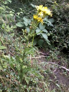 Pflanze 1 - (Pflanzen, bestimmen)